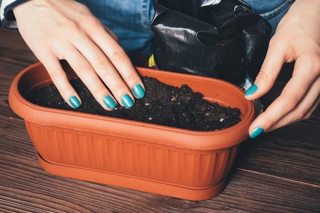 As mãos das mulheres com uma manicure brilhante derramado o solo na panela para o cultivo de plantas