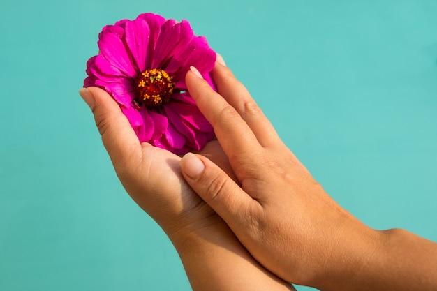 As mãos das mulheres seguram uma flor em suas palmas. cuidados com a pele das mãos e unhas