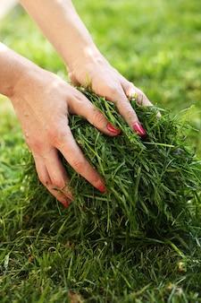 As mãos das mulheres tomam grama