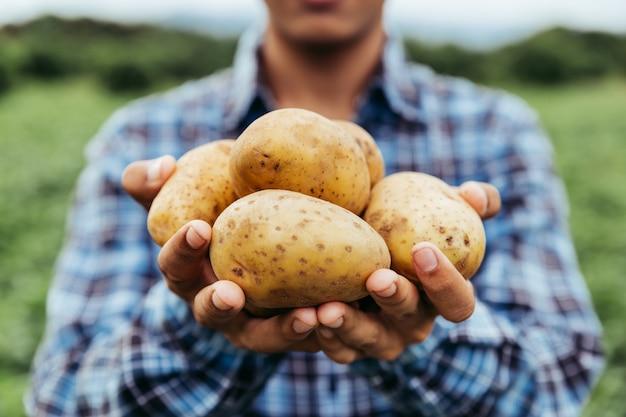 As mãos do agricultor mostram sua batata fresca na fazenda e prontas para dá-los ao cliente, entrega de produtos do mercado de produtos frescos, compras online, agricultura e conceito de natureza.
