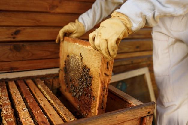 As mãos do apicultor retiram da colméia uma moldura de madeira com favo de mel. colete mel. apicultura.
