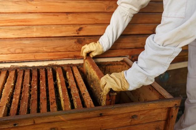 As mãos do apicultor retiram da colméia uma moldura de madeira com favo de mel.