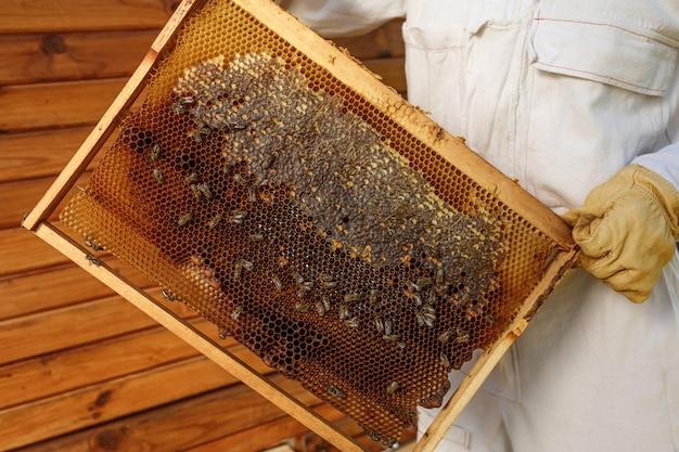 As mãos do close up do apicultor prendem o quadro de madeira com favo de mel. colete mel. conceito de apicultura.