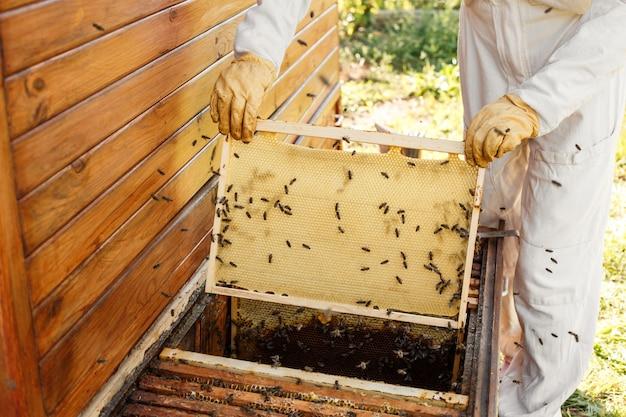 As mãos do close up do apicultor prendem o quadro de madeira com favo de mel.