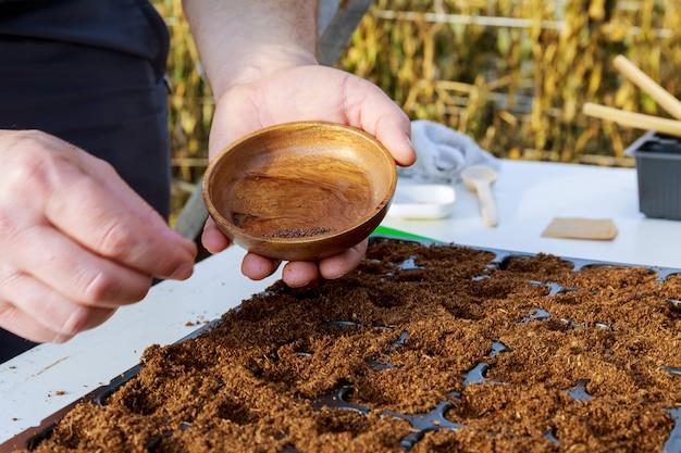 As mãos do fazendeiro semeiam as sementes das plantas. cultivo de mudas, transplante, plantio de hortaliças. conceito de agricultura.