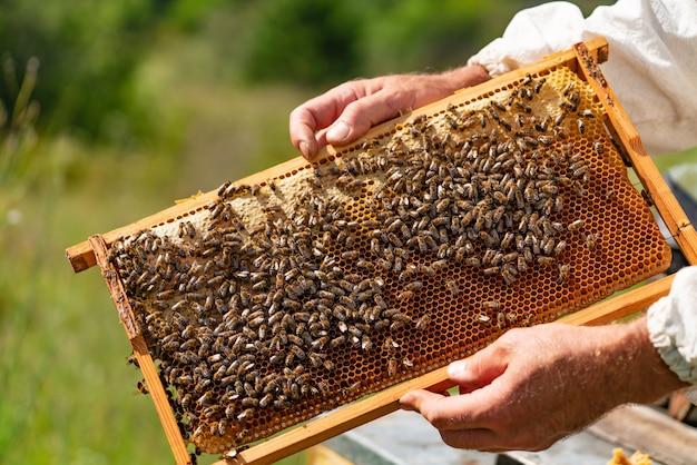 As mãos do homem guardam um quadro de madeira com favos de mel e abelhas no jardim no verão.