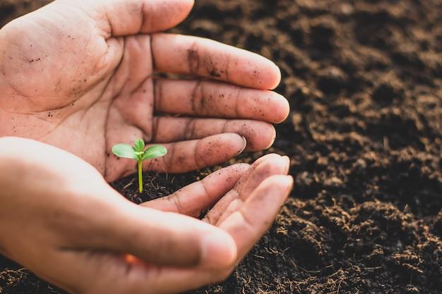 As mãos dos homens estão plantando mudas.