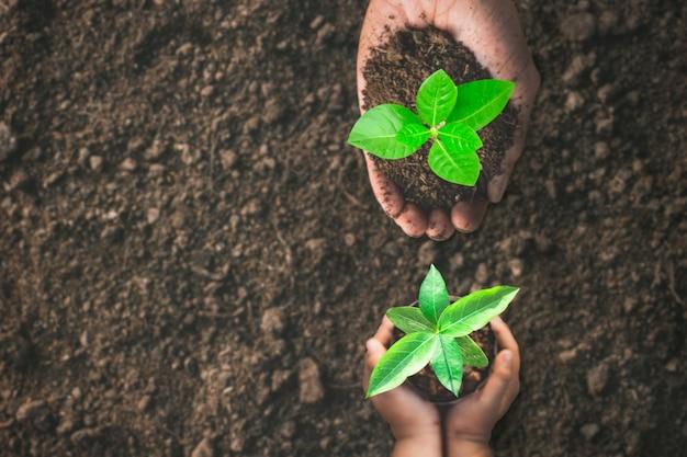 As mãos dos meninos e as mãos dos homens estão ajudando a plantar as mudas.