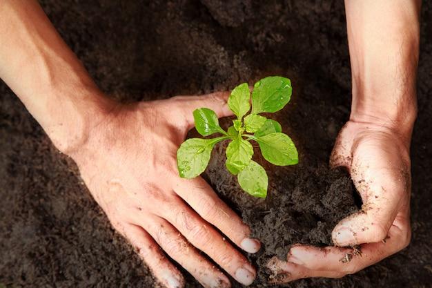 As mãos estão plantando árvores verdes. duas mãos estão cavando árvores.