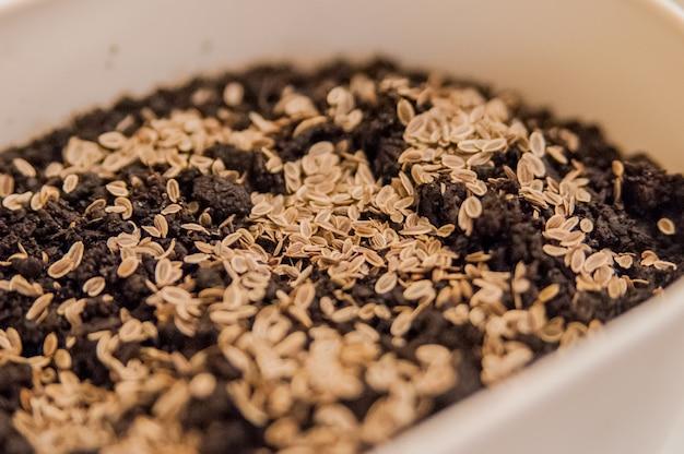 As mãos femininas com mãos brilhantes de manicure estão semeando grãos e solo em uma panela para cultivar plantas. mulher semeando sementes no chão à mesa em casa. o jardineiro feminino semeia mudas em sua casa
