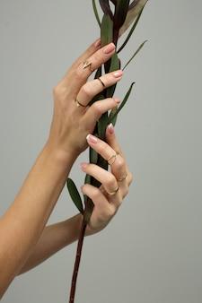 As mãos femininas com uma manicure elegante e delicada e anéis nos dedos seguram uma planta verde