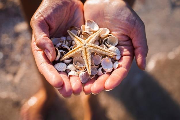 As mãos femininas nas palmas das mãos seguram conchas e uma estrela do mar na praia.