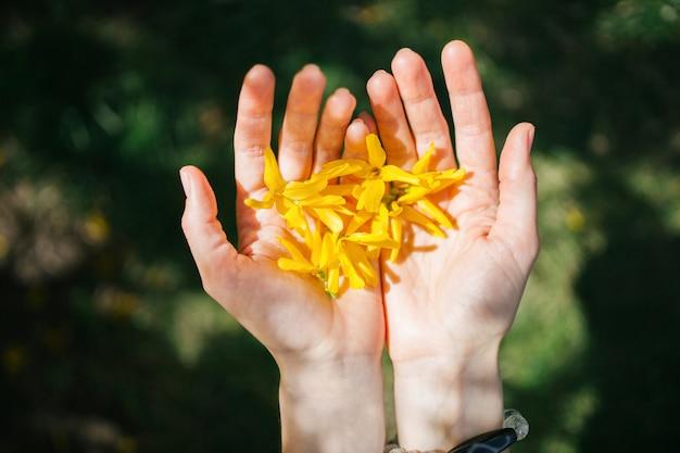 As mãos guardam as flores amarelas da mola estão em um fundo natural. liberdade e amor natureza concept