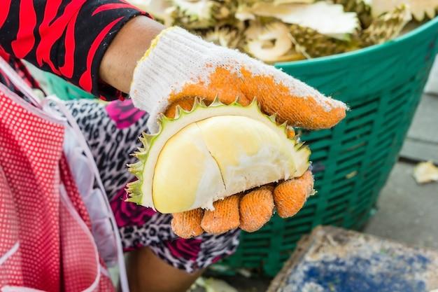 As mãos são durian cascas, lidar com um grande durião mostrar a carne amarela durian para comer.
