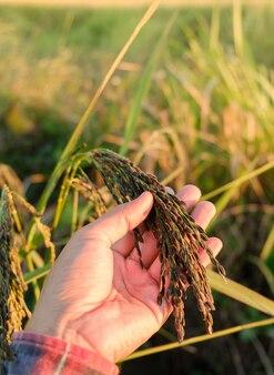 As mãos tocam os ouvidos na fazenda