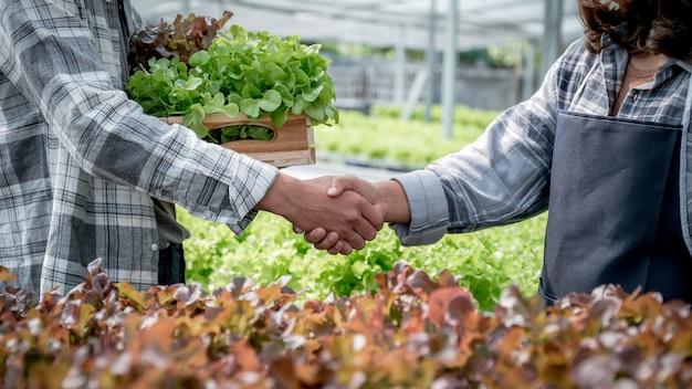 As mãos tremem após o agricultor colher salada de vegetais orgânicos, alface da fazenda hidropônica para os clientes.