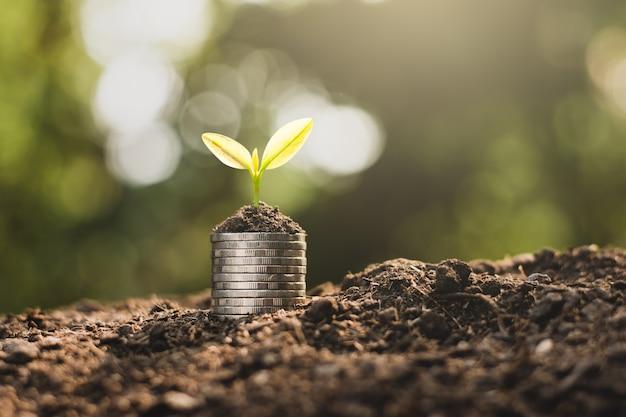 As moedas estão empilhadas no chão e as mudas estão crescendo em cima.
