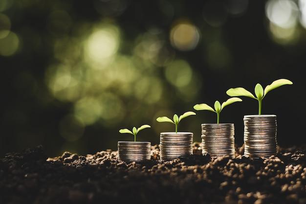 As moedas são empilhadas no chão e as mudas crescem por cima, o conceito de economia de dinheiro e crescimento financeiro.