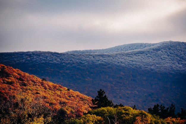As montanhas do cáucaso no final do outono. encostas distantes na neve e ao pé das árvores amarelas.