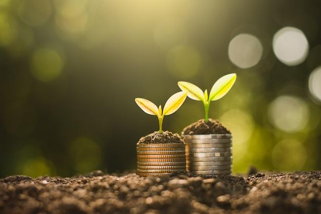 As mudas crescem nas moedas, pensando no crescimento financeiro.