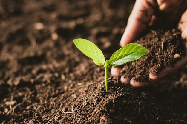 As mudas estão crescendo a partir do solo rico.