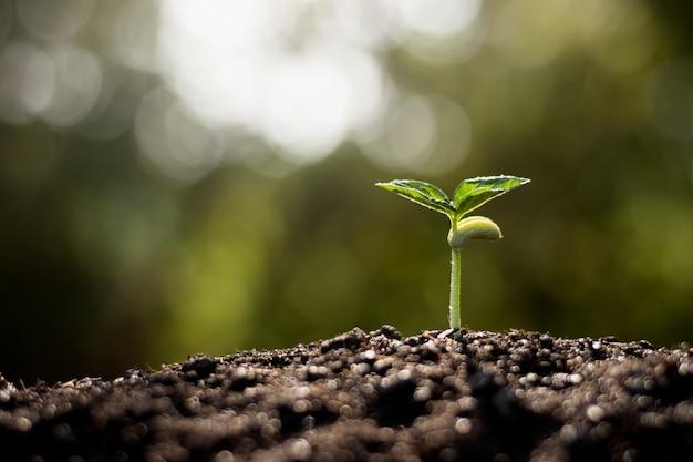 As mudas estão crescendo de solo fértil, o conceito de ecologia.
