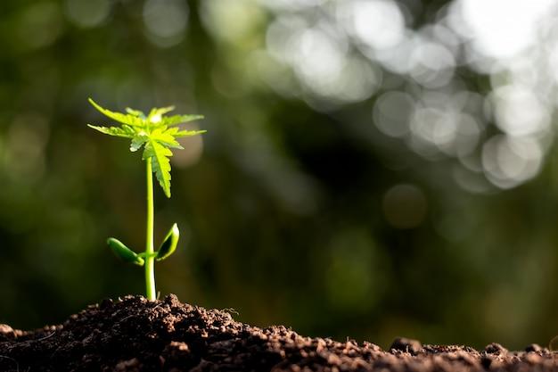 As mudas estão crescendo de solos ricos.
