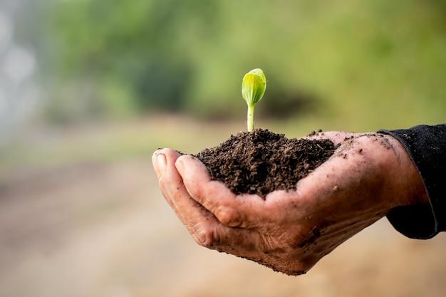 As mudas estão crescendo do solo.