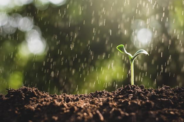 As mudas estão crescendo em solo fértil.