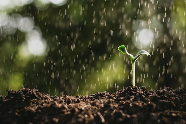 As mudas estão crescendo enquanto a chuva está caindo.