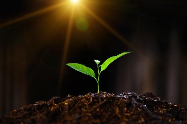 As mudas estão crescendo no solo e na luz do sol.
