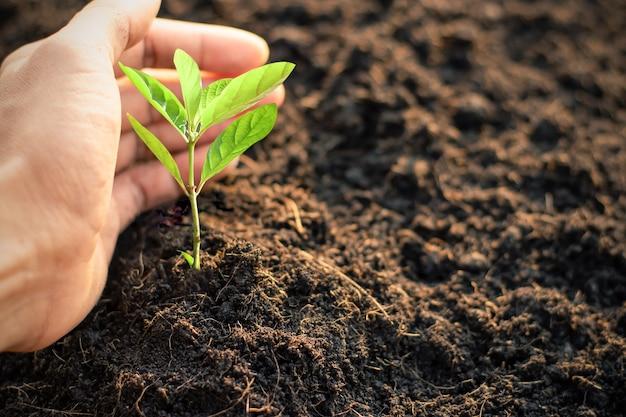 As mudas estão crescendo no solo fértil e as mãos gentis dos homens estão abraçando, o dia mundial do meio ambiente.