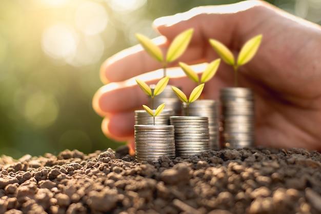 As mudas são cultivadas em uma moeda colocada no chão.
