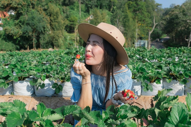 As mulheres comem morangos no agricultor de frutas.
