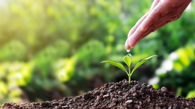 As mulheres usam as mãos para derramar água, plantar mudas no solo e crescer plantas