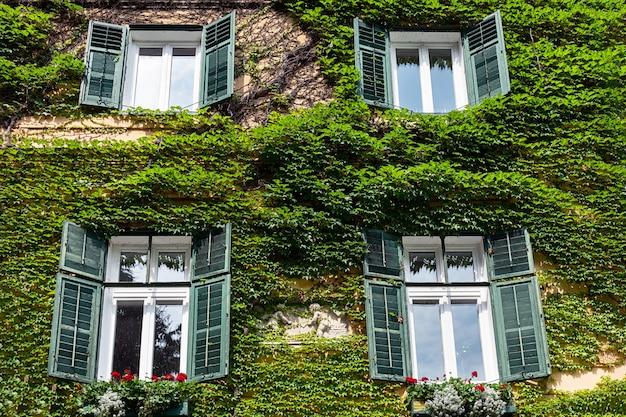 As paredes da casa italiana estão cobertas de uvas silvestres.