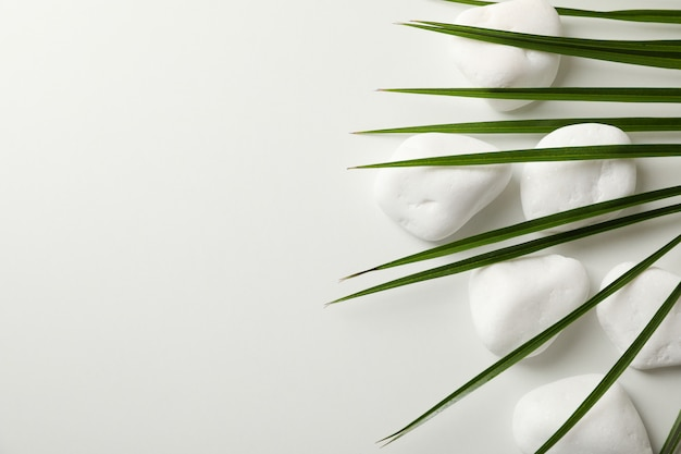 As pedras do mar e a palma ramificam no fundo branco, espaço para o texto. conceito de spa