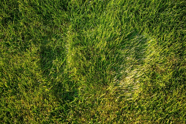 As pegadas frescas na grama verde nas luzes do pôr do sol