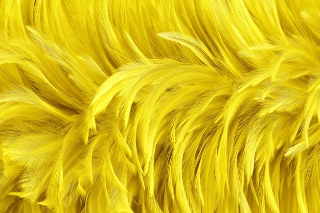 As penas de pássaro amarelas douradas bonitas surgem o fundo da textura.