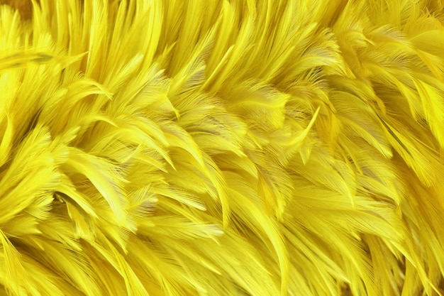 As penas de pássaro amarelas douradas bonitas texture o fundo.