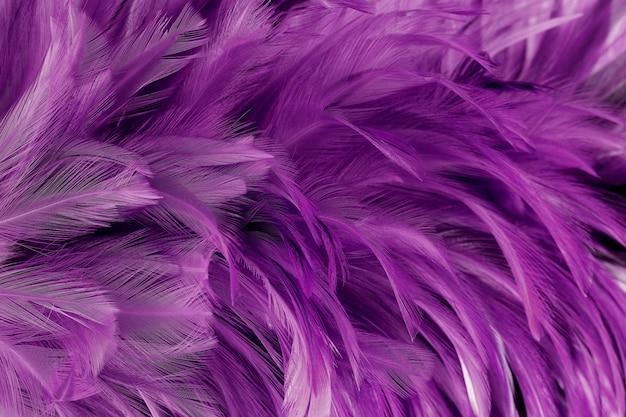 As penas de pássaro roxas escuras bonitas texture o fundo.