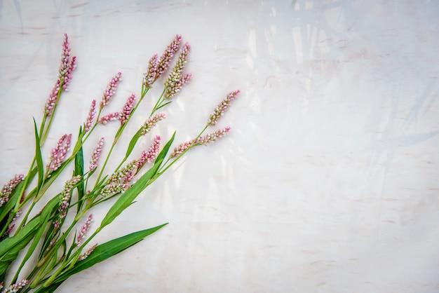 As pequenas flores cor de rosa de persicaria maculosa no fundo brilhante
