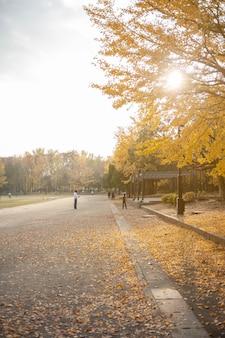 As pessoas visitam a ginkgo avenue, em tóquio. árvore de ramo de folhas de ginko amarelo colorido