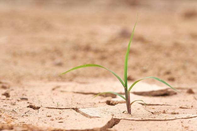 As plantas crescem no solo seco. as plantas tentam viver a próxima vida. meio ambiente