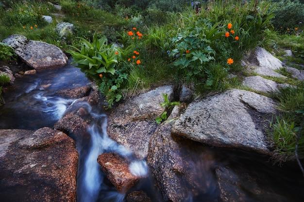 As plantas e as flores raras da montanha crescem perto do córrego