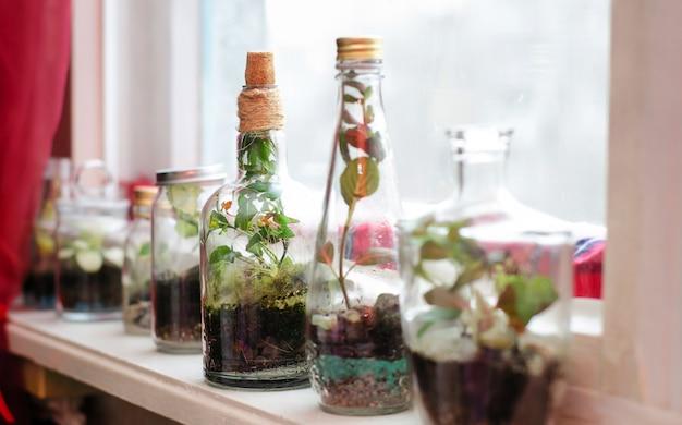 As plantas em garrafas