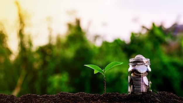 As plantas pequenas estão crescendo e moedas no jardim. - conceito de propriedade de investimento.