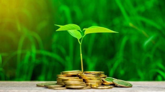 As plantas pequenas estão crescendo na pilha de moedas douradas no jardim.