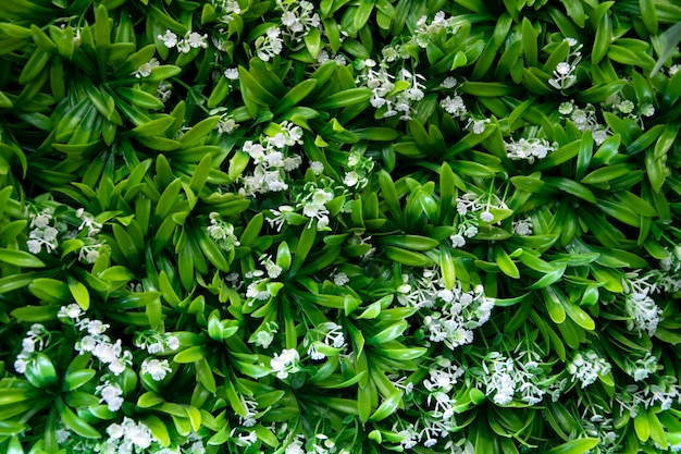 As plantas verdes decoram na parede. folhas verdes no fundo da parede.
