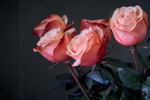 As rosas cor-de-rosa extremamente do close-up florescem o ramalhete em um vaso de cristal alto claro contra uma parede cinzenta, foco seletivo